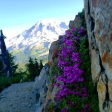 Pinnacle Peak Saddle