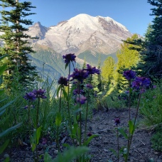Silver Forest, Mt Rainier
